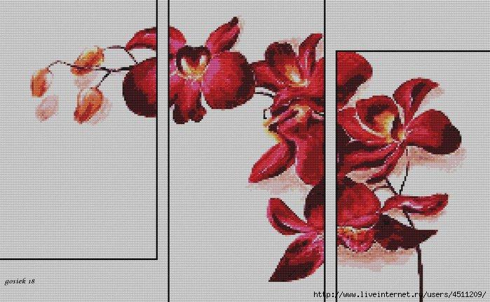 storczyki czerwone 3w1 (700x431, 218Kb)