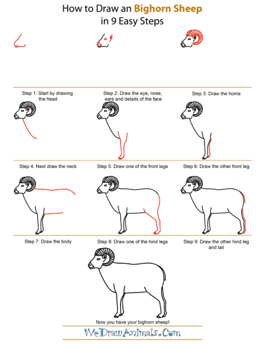 how-to-draw-a-bighorn-sheep-step-by-step (541x700, 111Kb)