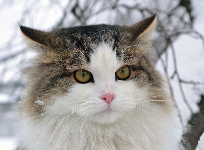nice_cat_21 (700x514, 117Kb)