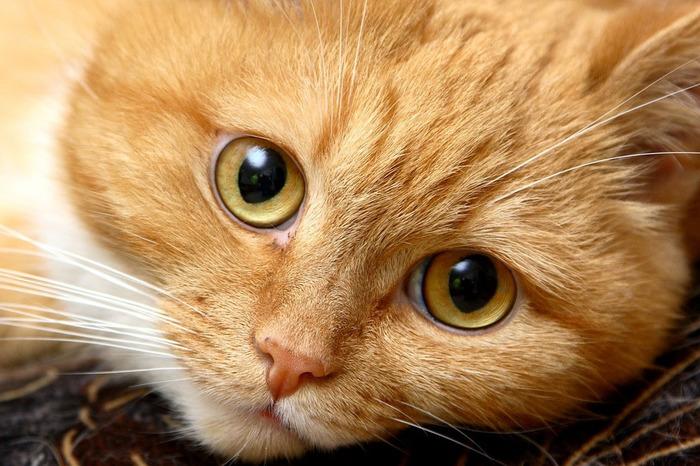 nice_cat_24 (700x466, 140Kb)