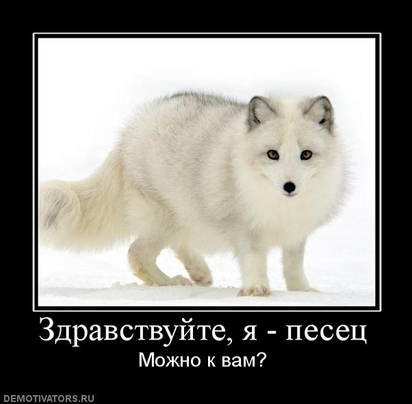 http://img0.liveinternet.ru/images/attach/c/0/119/137/119137968_187070_zdravstvujteyapesets.jpg