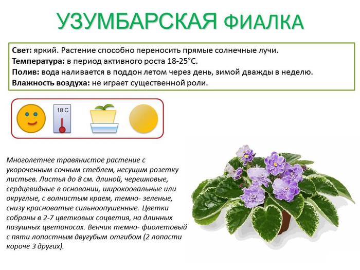 """Фотографии цветов и растений. Фотогалерея """"Цветы"""". Фото"""