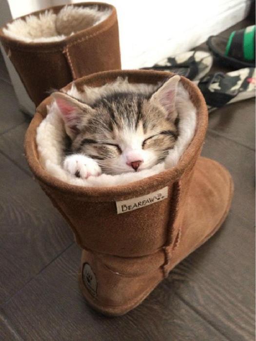 Фотографии 27 котов, уснувших в самых неудобных местах