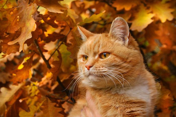 nice_cat_06 (700x466, 418Kb)