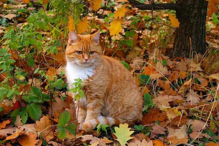 nice_cat_09 (700x466, 550Kb)