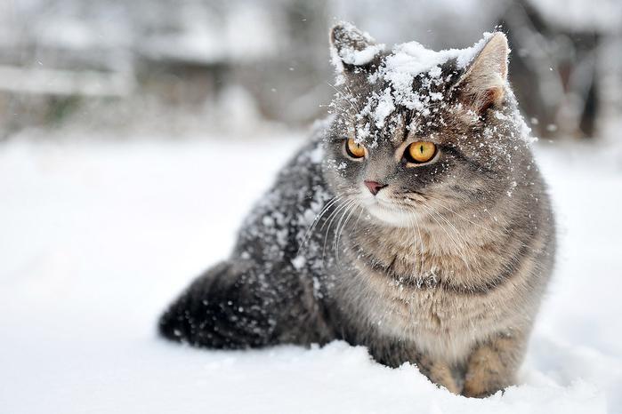 nice_cat_11 (700x466, 247Kb)