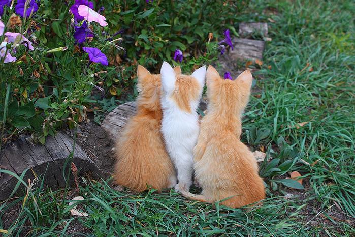 nice_cat_12 (700x466, 551Kb)
