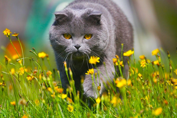 nice_cat_17 (700x466, 407Kb)