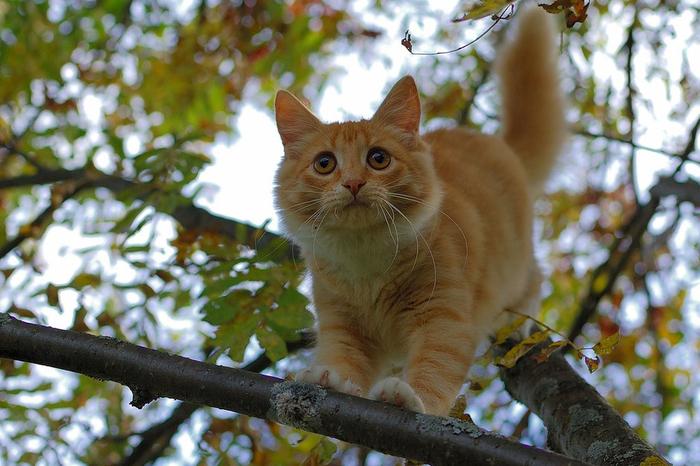 nice_cat_19 (700x466, 407Kb)
