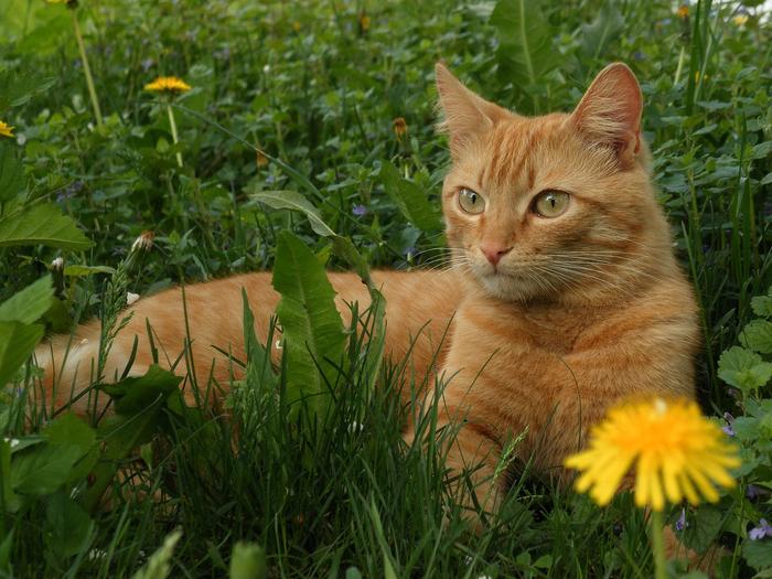 nice_cat_25 (700x525, 506Kb)