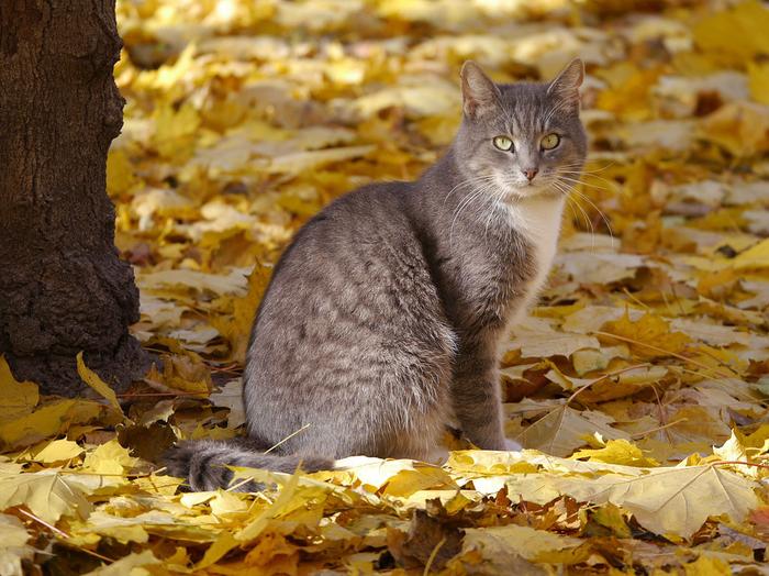 nice_cat_29 (700x524, 508Kb)