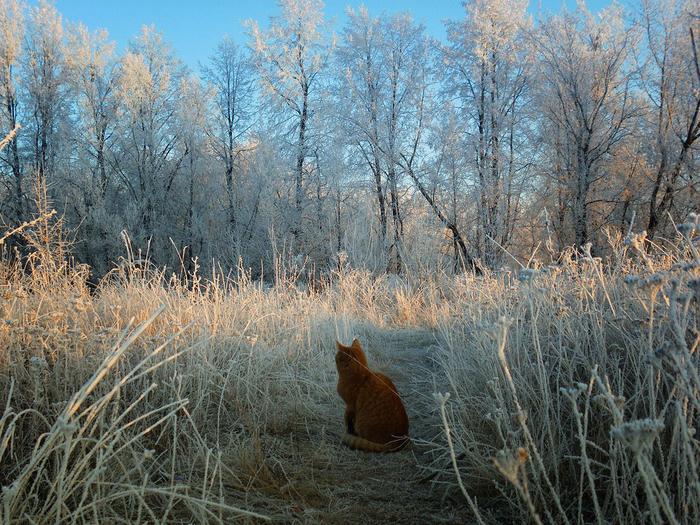 nice_cat_31 (700x525, 617Kb)