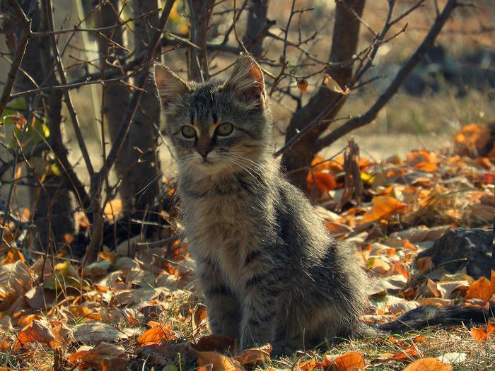 nice_cat_33 (700x525, 582Kb)