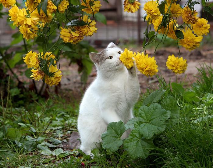 nice_cat_35 (700x550, 548Kb)