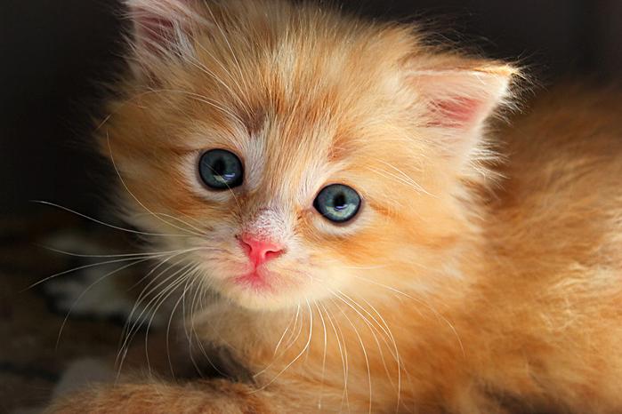 nice_cat_37 (700x466, 380Kb)