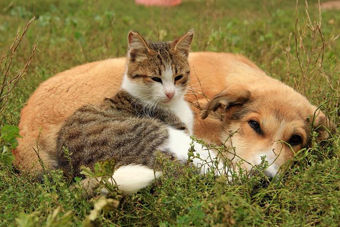 nice_cat_39 (700x466, 506Kb)