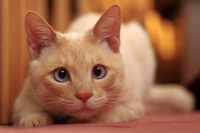 nice_cat_41 (700x466, 222Kb)