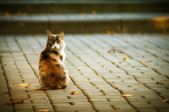 nice_cat_43 (700x465, 327Kb)