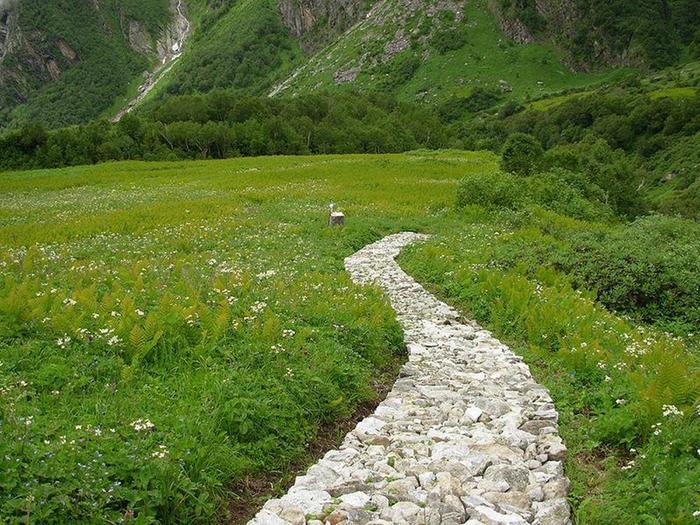 Национальный парк Долина цветов в Гималаях