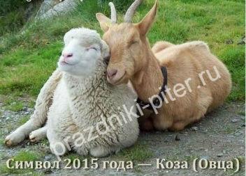 koza (352x253, 28Kb)