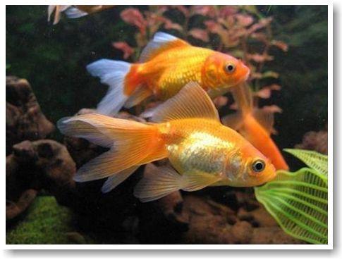 картинка «вред рыбы»/4387736_1_1_ (485x369, 29Kb)