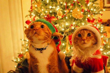 1416474648_christmas-cats-480x800 (450x300, 35Kb)