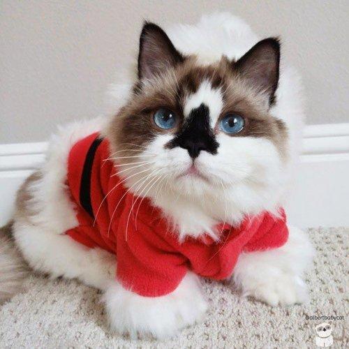 смешные кошки фото 1 (500x500, 176Kb)