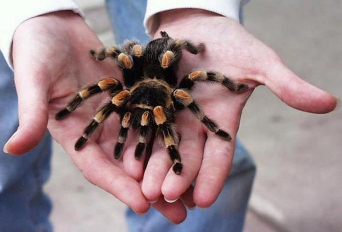 Люди до смерти боятся животных, которые абсолютно безвредны!