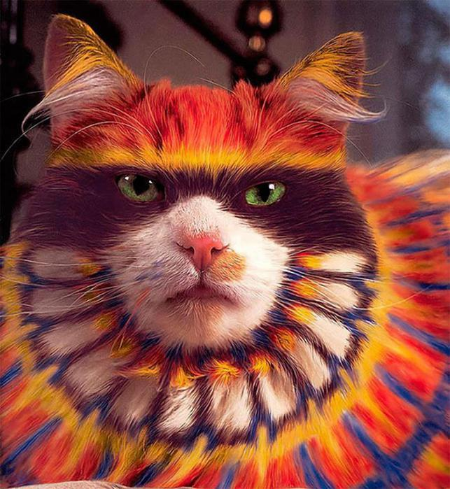 Кэтпейнтинг   форма искусства или издевательство над животными?
