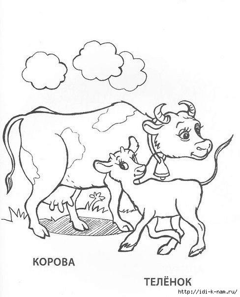 раскраски животныен и их детеныши, раскраска корова и теленок,