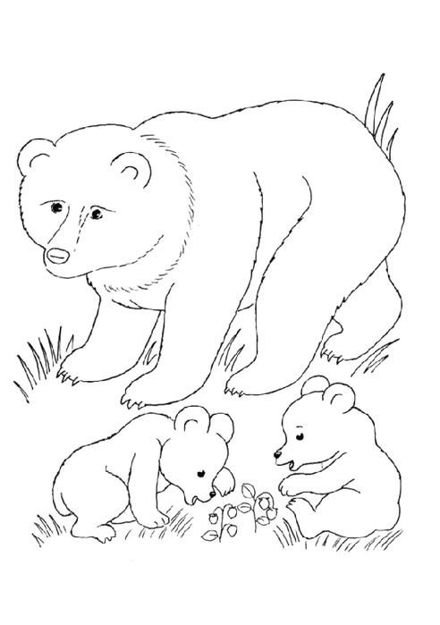раскраски животныен и их детеныши, раскраска медведица с медвежатами,