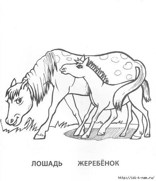 раскраски животныен и их детеныши, раскраска лошадь с жеребенком,