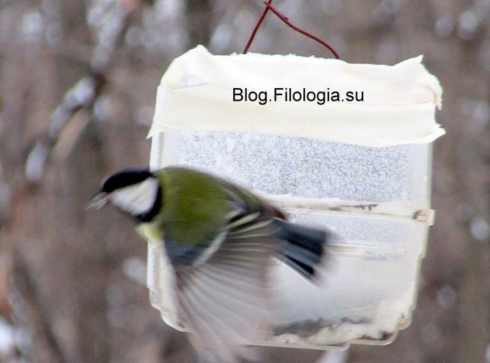 3241858_birds27 (700x519, 40Kb)