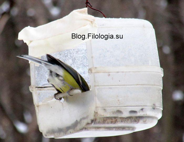 3241858_birds30 (700x540, 46Kb)