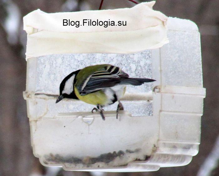 3241858_birds34 (699x563, 48Kb)
