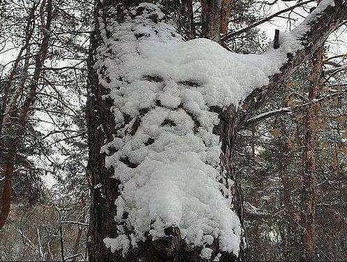 шутки природы зима (497x375, 295Kb)