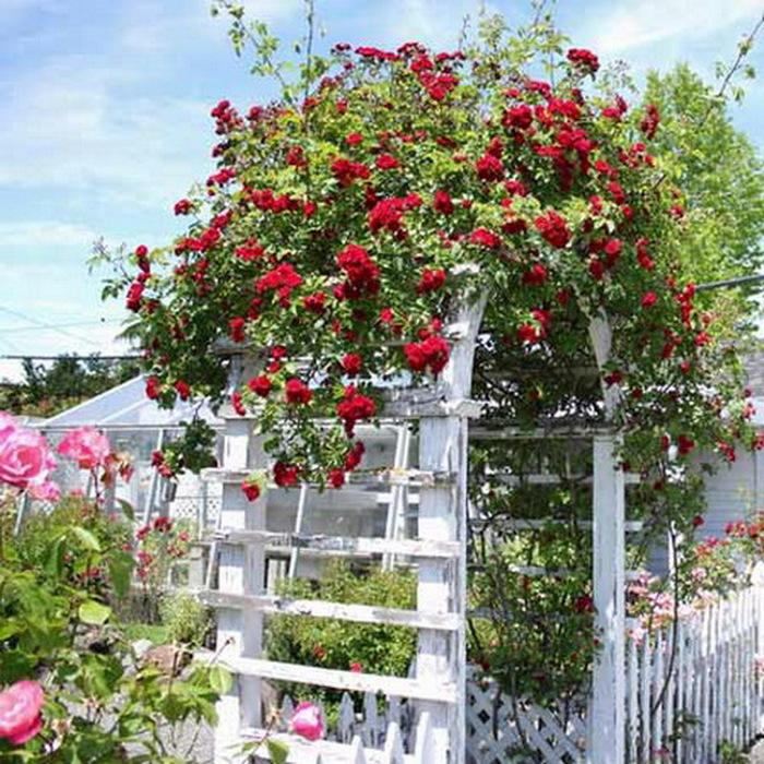 Как сделать арку для розы своими руками фото
