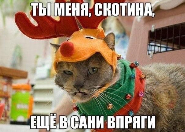 4650338_proxy_imgsmail_ru_2 (604x431, 234Kb)