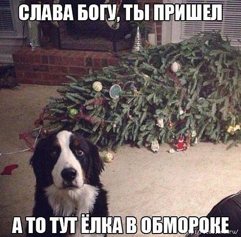 3925311_yolka_pes (489x480, 138Kb)