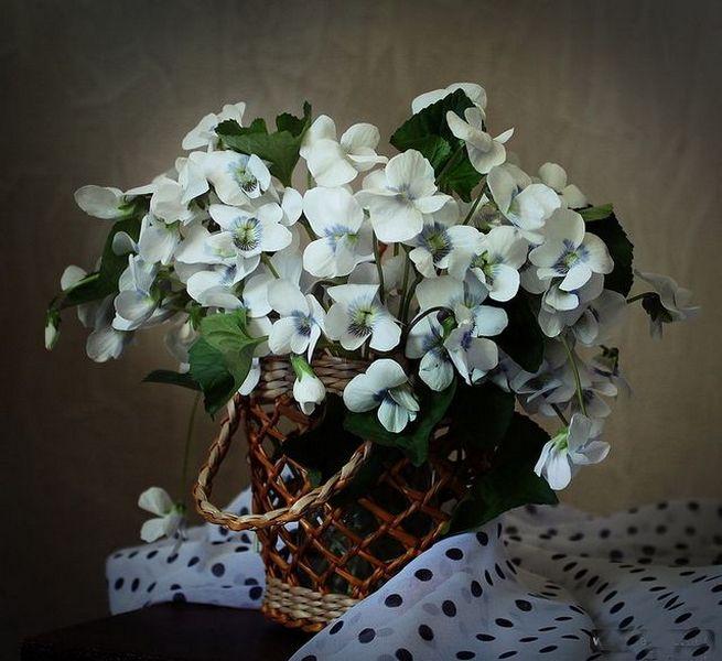 flowers_006 (655x600, 260Kb)