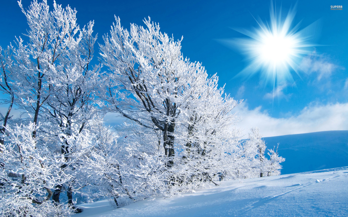sunny-winter (900x637, 492Kb)