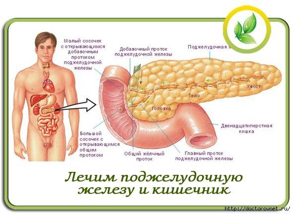 1420647118_podzheludochnaya_zheleza (590x432, 140Kb)