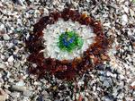 ������ sea-Glass-Beach-Fort-Bragg-California-3 (700x528, 556Kb)