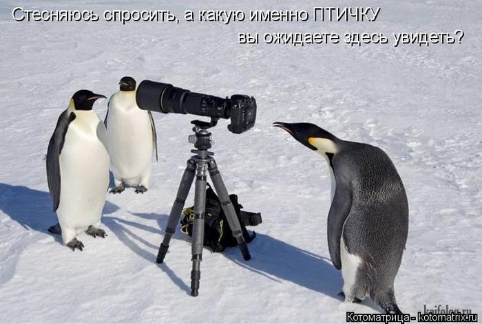 kotomatritsa_1L (700x471, 263Kb)
