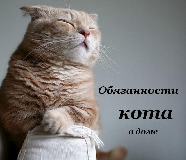 Обязанности кота в дом