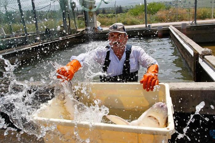 Как делается черная икра в Израиле (фоторепортаж)