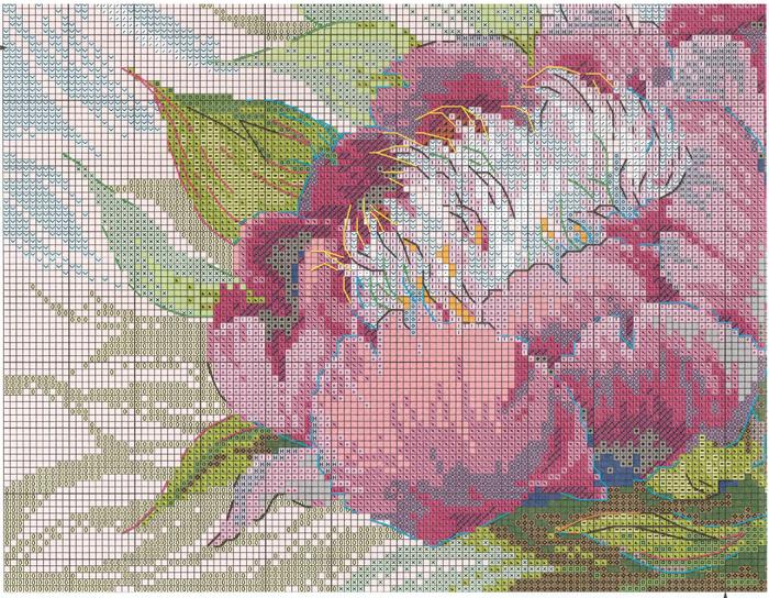 Stitchart-rozovye-piony3 (700x544, 713Kb)