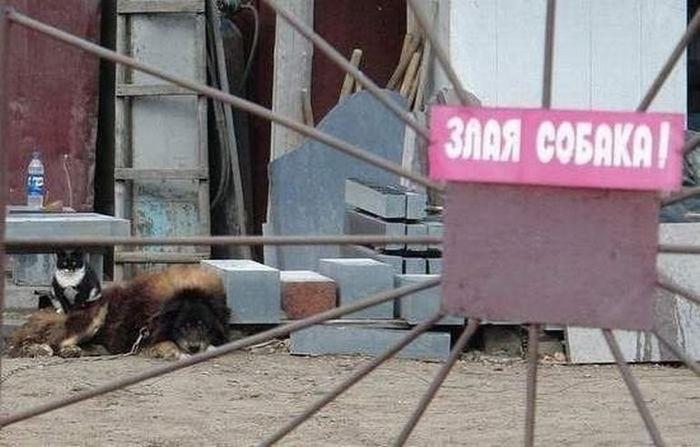 злая собака (700x447, 261Kb)