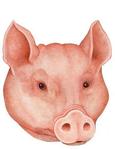 ������ свинка (385x500, 189Kb)
