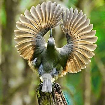 طيور روعة (3) (346x346, 119Kb)